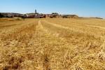 Calaf acollirà la primera edició de l'Agro Alta Segarra
