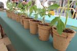 L'Eco Fira de Calaf torna aquest 13 de maig amb més activitats i expositors