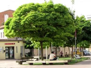 plaça_dels_arbres