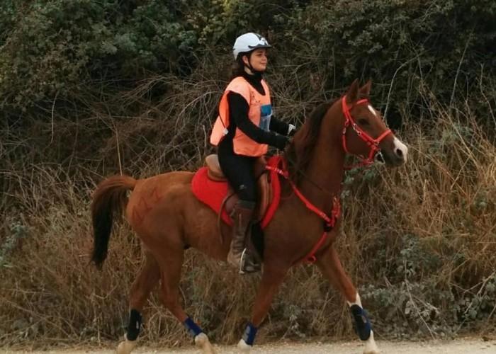 Més de 100 cavalls van participar al 7è Raid Cal Graells - Alta Segarra